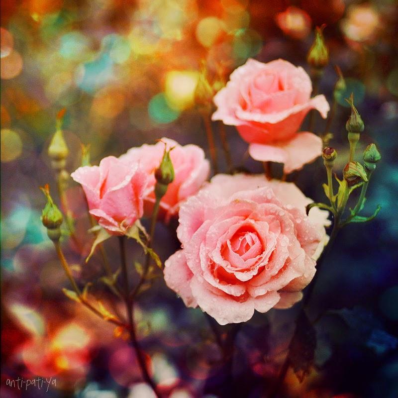 http://anti-pati-ya.deviantart.com/art/Rose-Garden-117813184