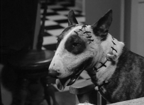 sparky the dog frankenweenie. at the time, tim burton had made something a little too weird for disney to handle. it was certainly out of step with studio\u0027s image time - they sparky dog frankenweenie