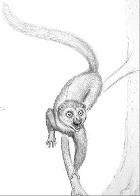 primates el eslabon perdido Darwinius