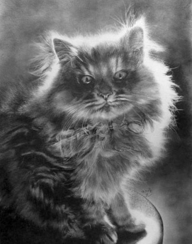 Incredible realistic pencil drawings