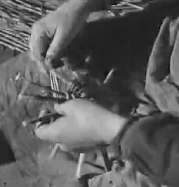 Le traitement du psoriasis à kieve les rappels