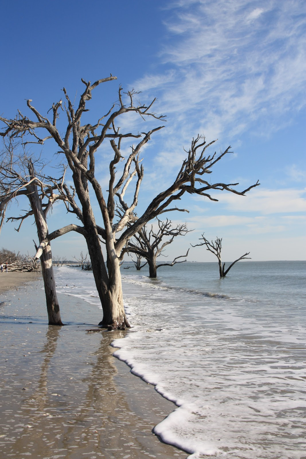 A Is For Adventure Botany Bay On Edisto Island