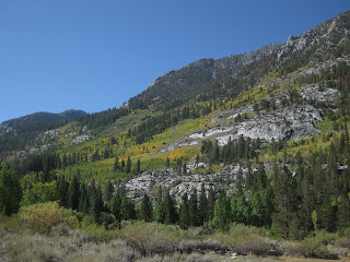 Pines and golden aspens on rocky slopes near South Lake, Eastern Sierras, California