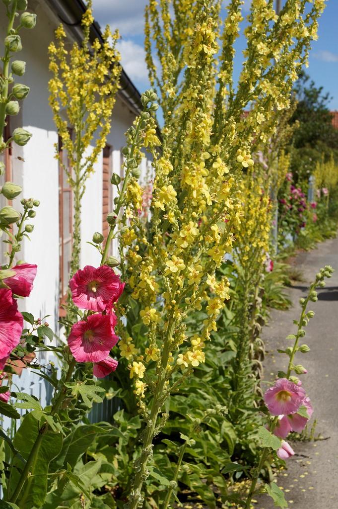 fotos de um jardim floridoDepósito Santa Mariah Casa De Praia Com