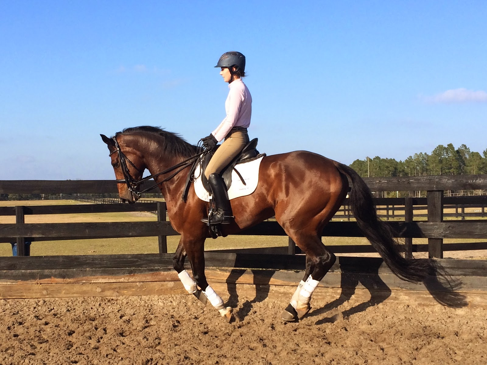 Simple   Wallpaper Horse Sunrise - IMG_5240  You Should Have_644976.JPG