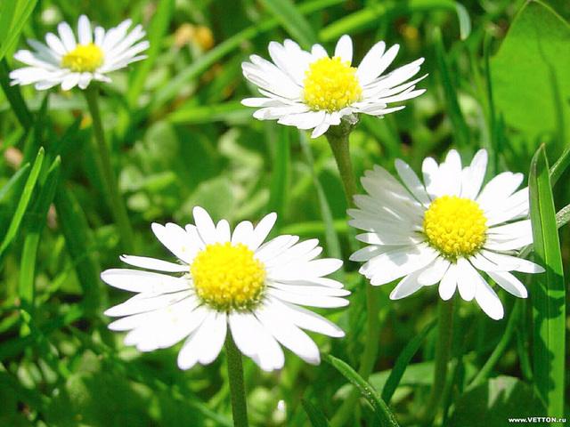 Лекарственные растения открытки