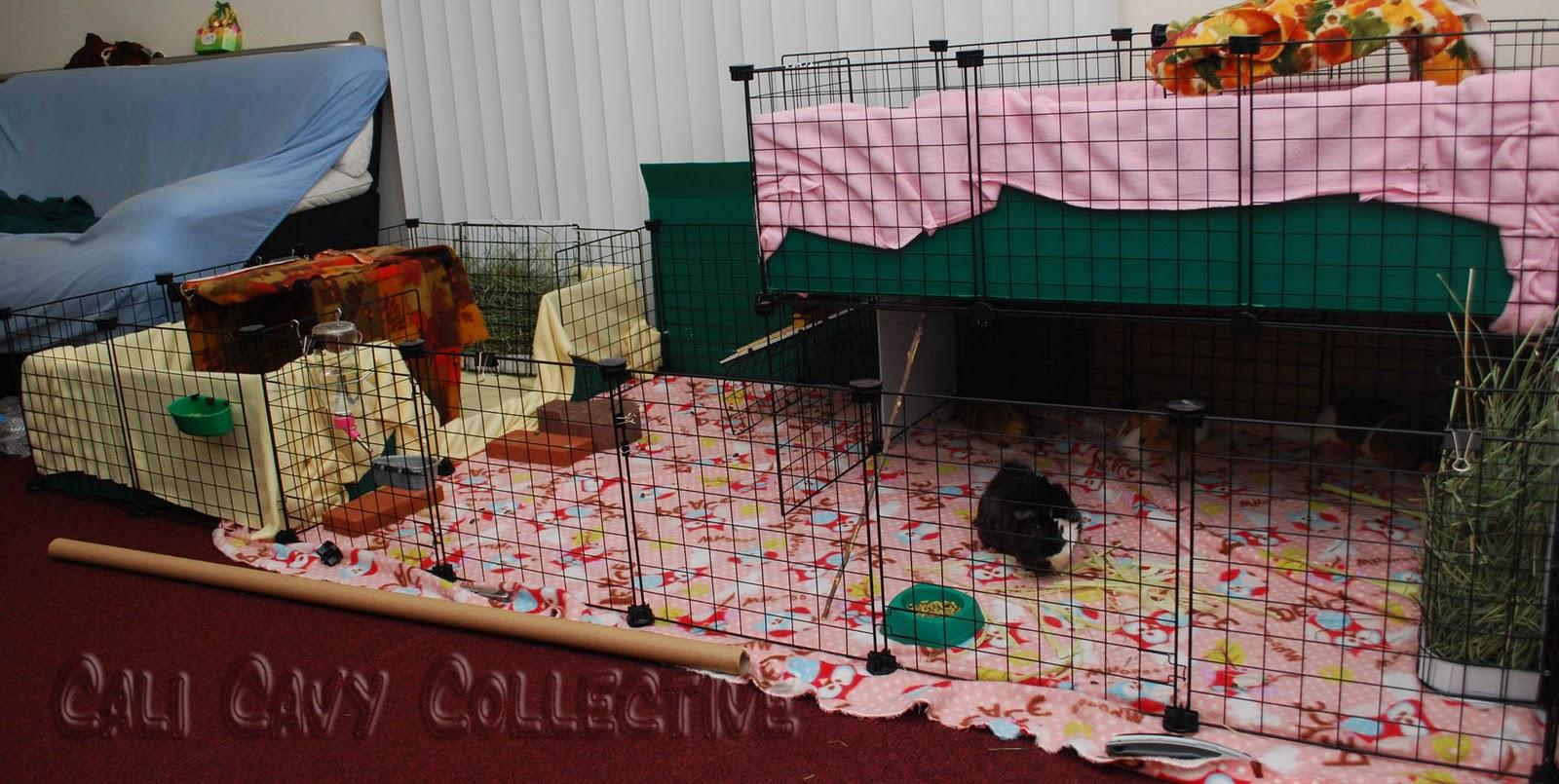 Unique guinea pig cages for Guinea pig homes