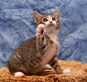 Fotos de gatitos 24-03-13 *. Citas para El Alma kitten