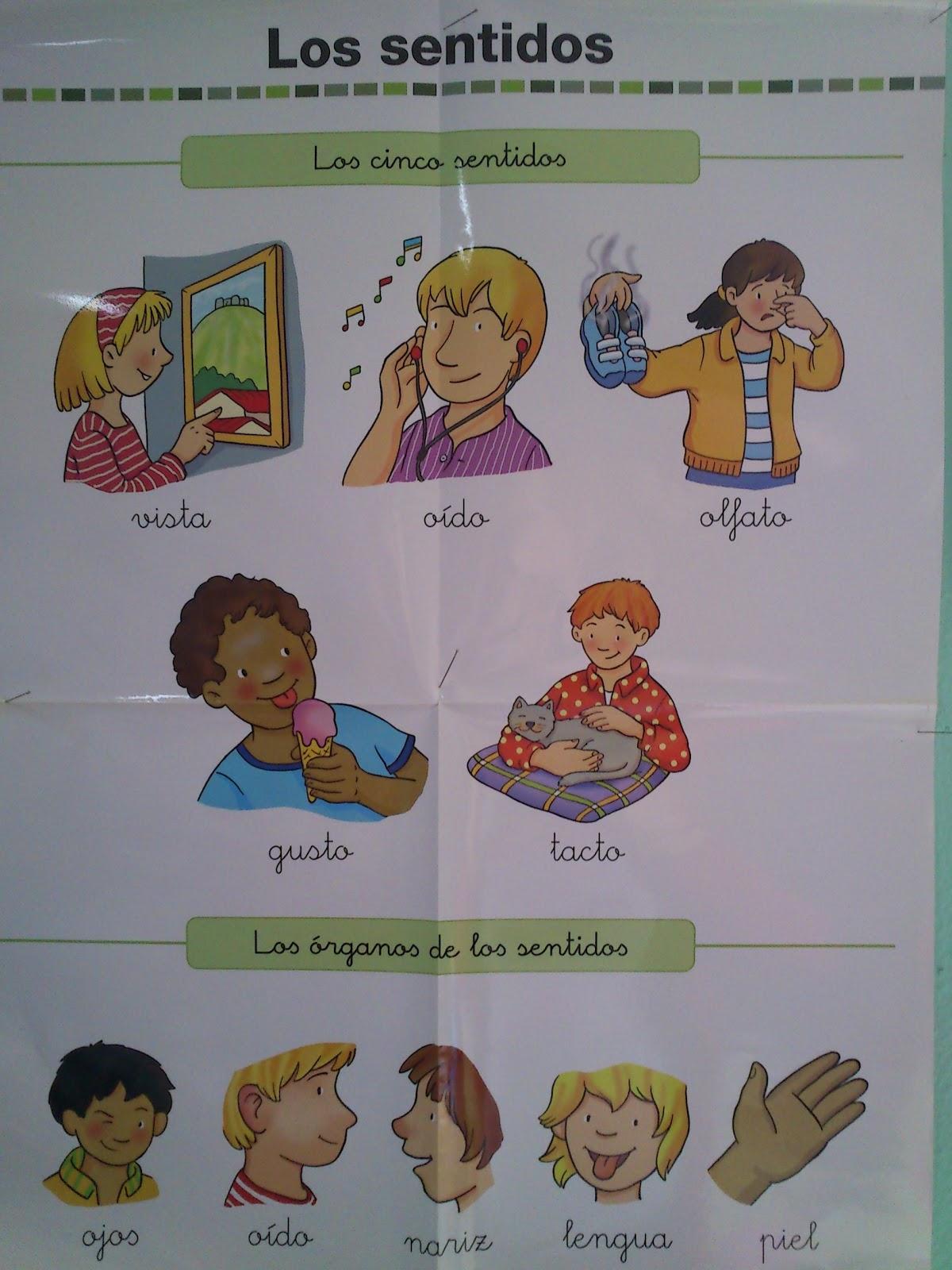 Ingl s con la se o teacher silvia noviembre 2012 for Mural de los 5 sentidos