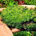 """Tumbuhan Lumut (Bryophyta) """"Artikel Lengkap"""""""
