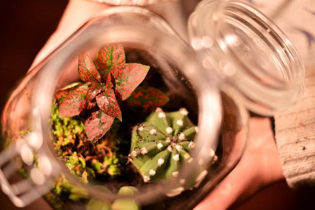 flaschengarten selber machen