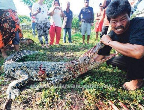 Một người đàn ông mà đứa con trai bị cá sâu ăn đã vạch miệng cá sấu cho tay vào khoắng trong họng nó xem còn đốt xương nào của con mình không.