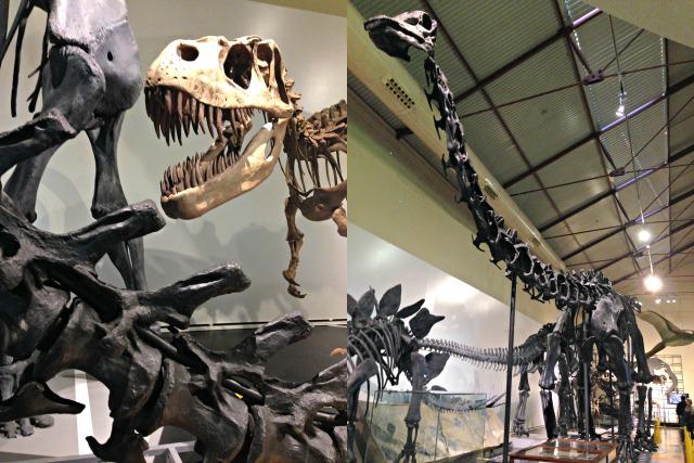 Dinosaurier T-Rex Madrid Museo Nacional de Ciencias Naturales - unterwegs mit Kindern