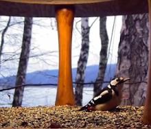 Ptasi karmnik w Bieszczadach