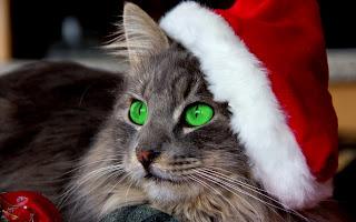 Gato Navidad ojos verde