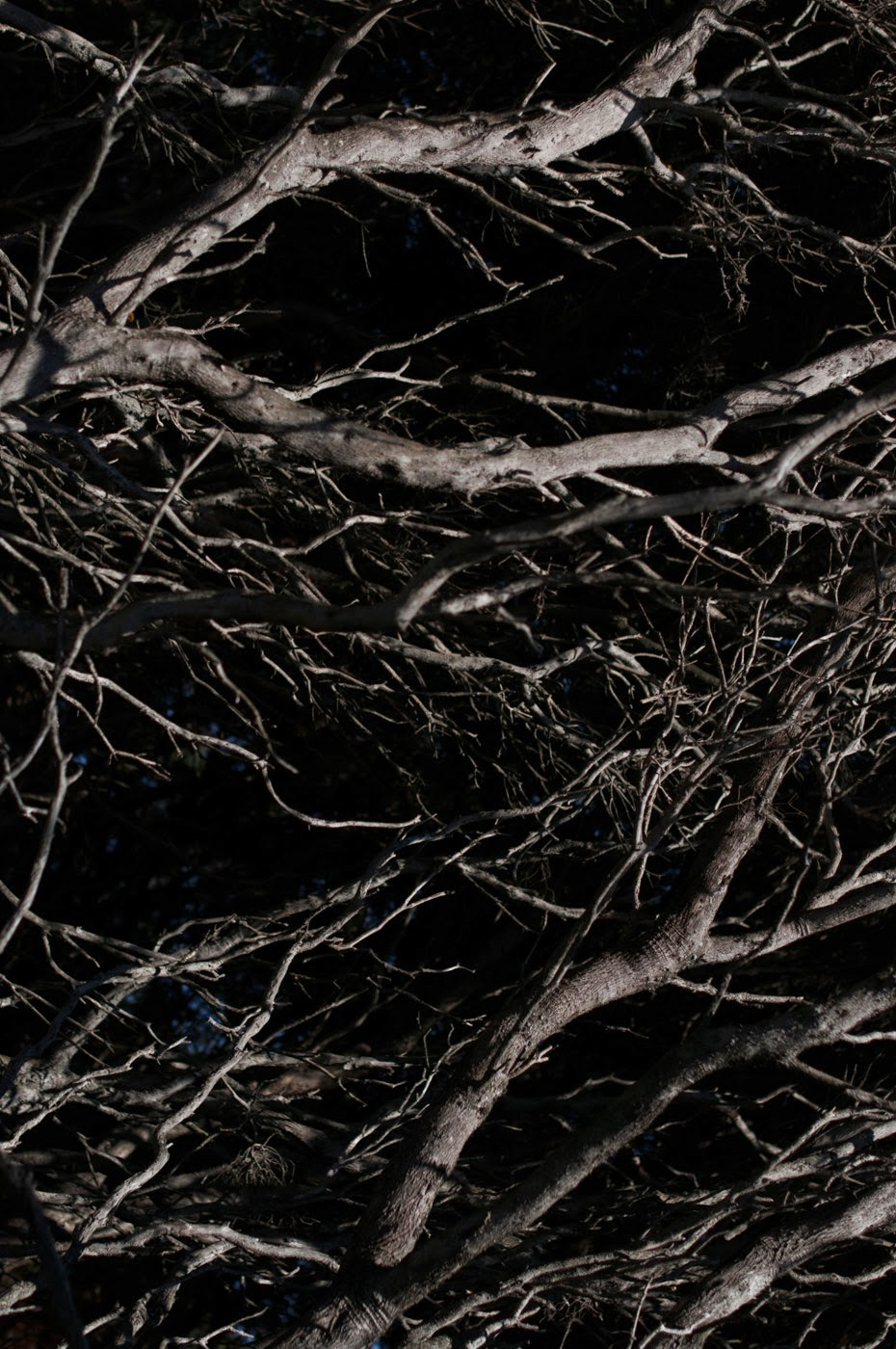 a photographic series of silhouettes based my observations of moonlit coastal moonah woodlands in Anglesea, Victoria Australia called night garden. Photographed by Tim Macauley from The light monkey Collective and posted in the fine art blog you won't see this at MoMA