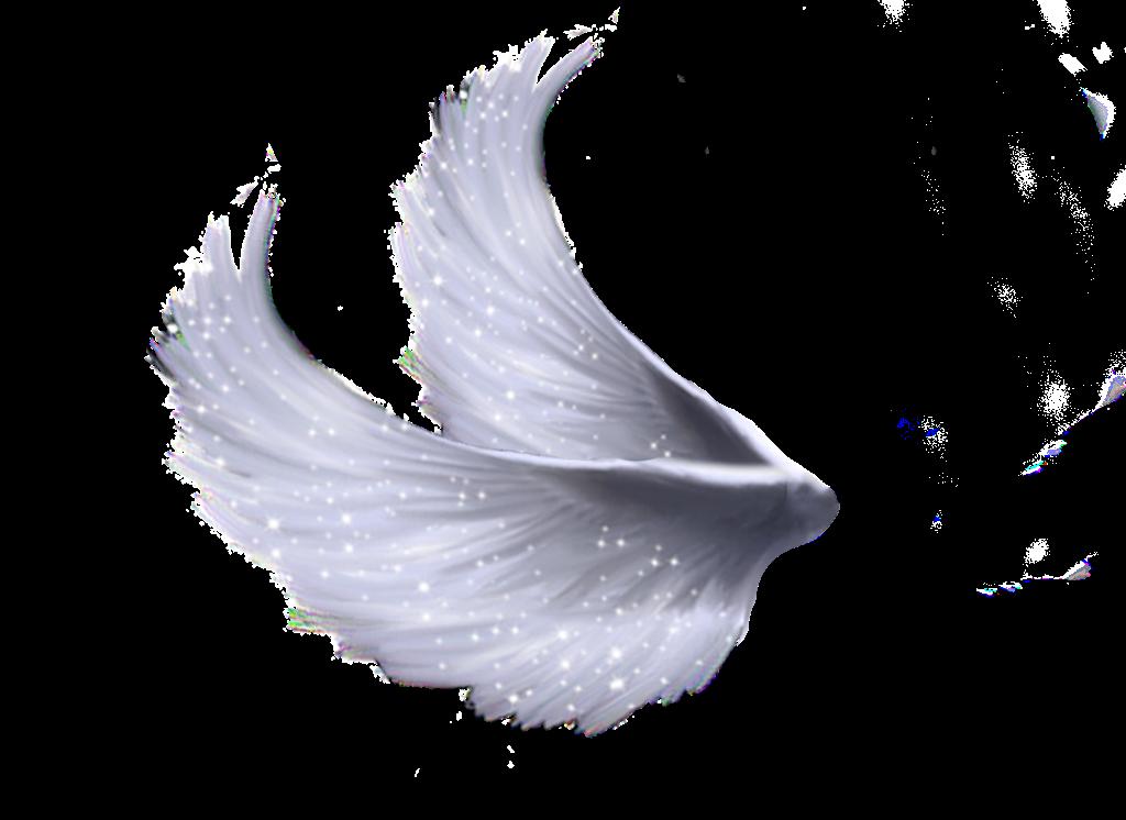 Realistic Angel Wings Side View Realistic Angel Wings Side