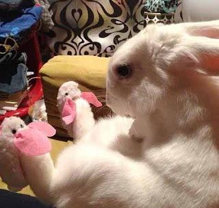 Kelinci Pakai Sepatu Kelinci