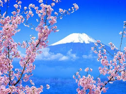 Japan cherry blossoming