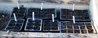 A few trays of seeds planted