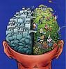 un exemple de cerveau humain