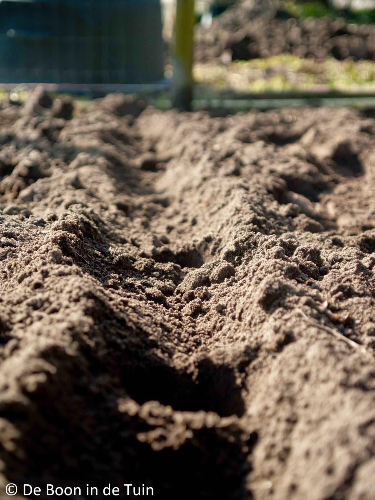 moestuin volkstuin in maart aardappels poten