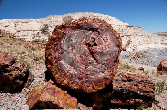 Imagine that you walk PetrifiedForestGiantLogs5-580x385