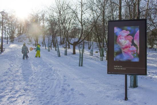 Sośnia Góra i rekreacja śnieżna