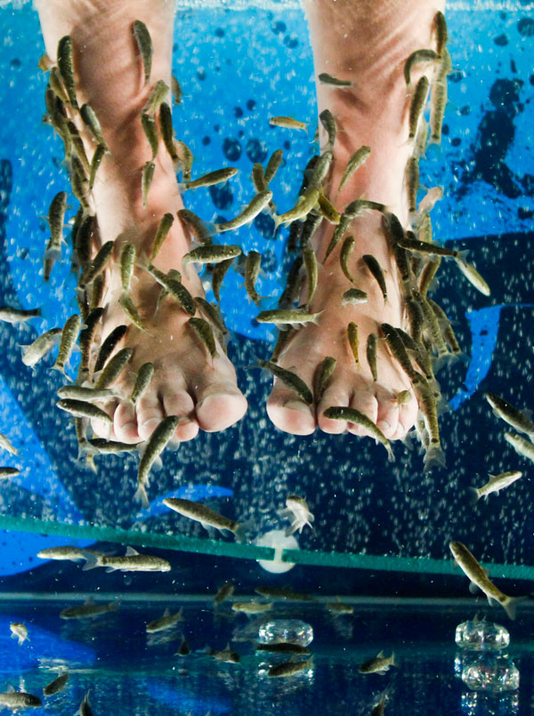 Fish pedicure spare me no details for A salon called fish