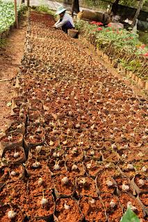 Beet mit Assam Sprossen