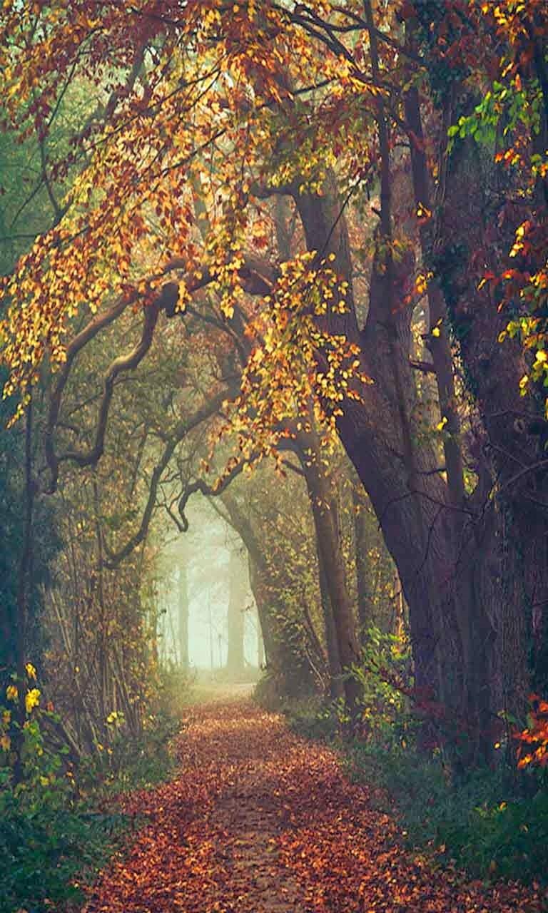 Autumn BlackBery Z10 Wallpapers