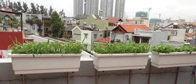 Vườn rau sạch trong nhà