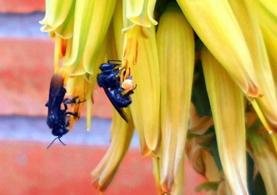 Insectos Avispas