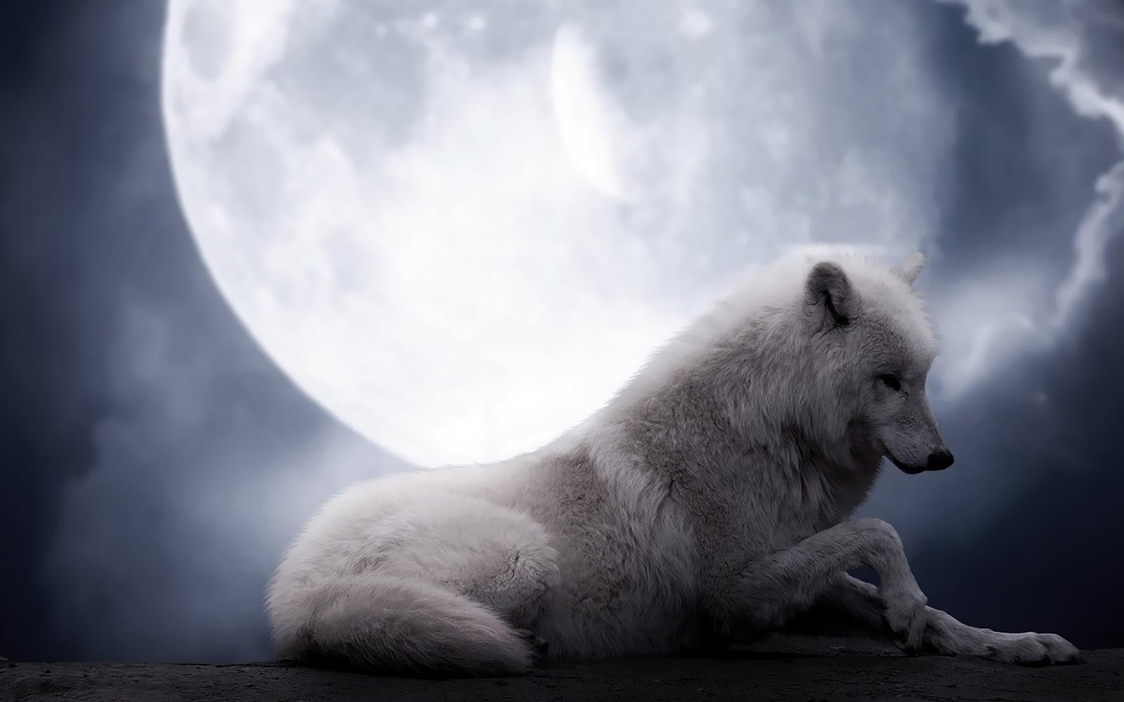 http://1.bp.blogspot.com/-YBHX3UuakDI/URYZSRc3hQI/AAAAAAAAMp0/BSzmSYL8JZA/s1600/wallpaper-van-een-witte-wolf-met-volle-maan.jpg