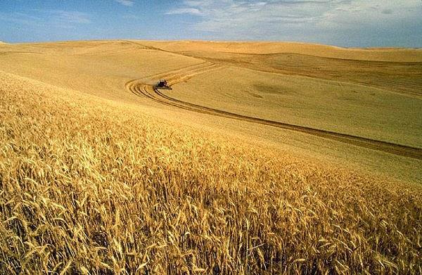Degradasi Lahan Pertanian