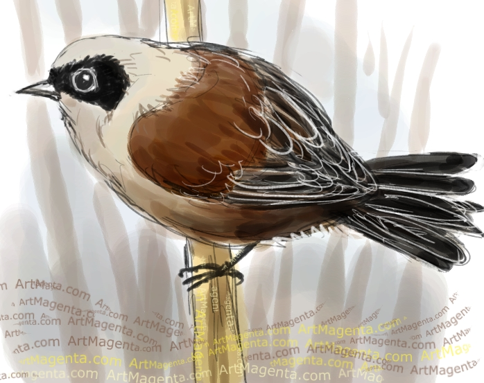 Penduline Tit sketch painting. Bird art drawing by illustrator Artmagenta