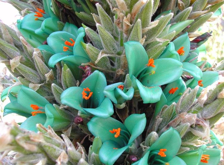 Мои растения архив блога редкие и