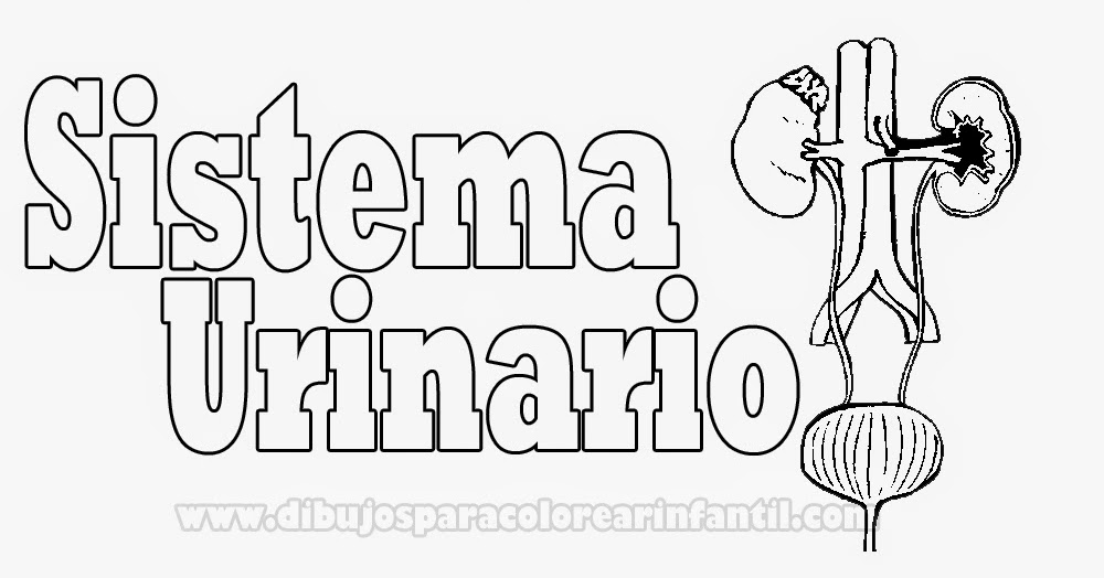 Juliana - Odontología : SISTEMA URINARIO