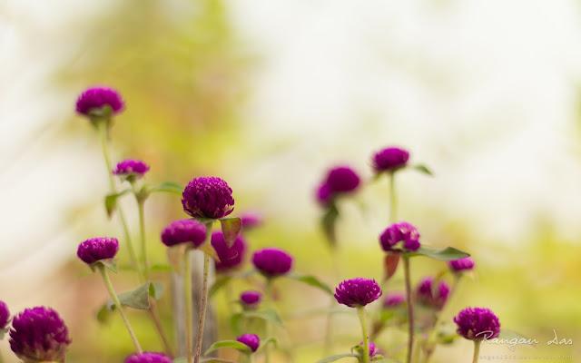 Hình nền hoa màu tím đẹp nhất