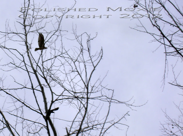 Image of crow and hawk flying among the trees.