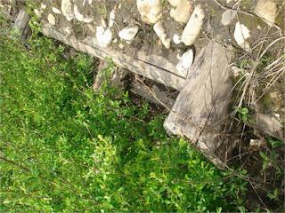 2º año. Muro Krainer. Recuperación ambiental de espacios degradados.