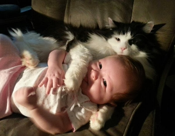 Funny cats - part 78 (35 pics + 10 gifs), cat pics, cat cuddle with human baby