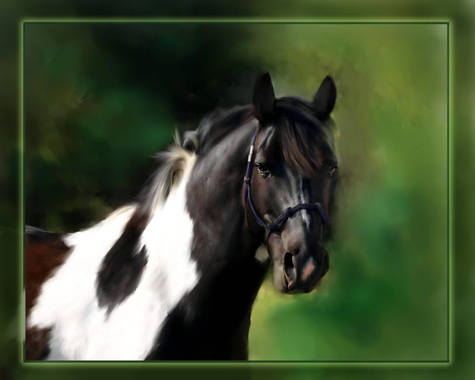 The gallery for --> Professional Horse Photography
