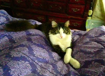 Anakin Sitting Purrty! Anakin The Two Legged Cat