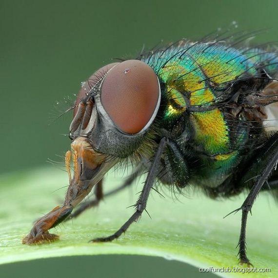 http://1.bp.blogspot.com/-YD46VyuC2_s/TiALyajSOhI/AAAAAAAAGoQ/qX5eZH2TzzI/s1600/colorful-insects-17.jpg