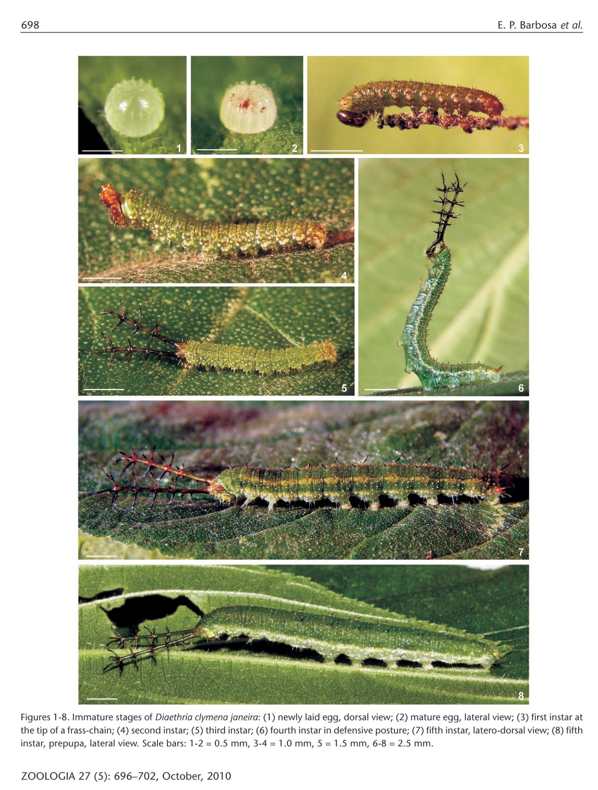 88 butterfly diaethria clymena