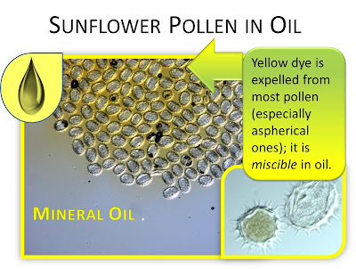 sunflower pollen in oil