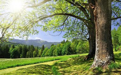 Natyra,cka eshte natyra,natyra e bukur