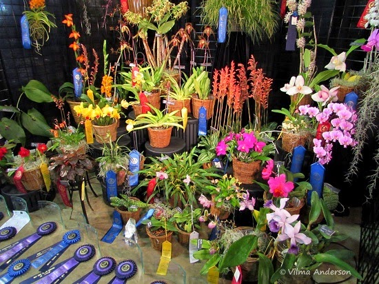 Display of orchids at the Maryland Orchid Show
