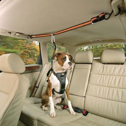 DIY! Faça seu cinto de segurança para cães